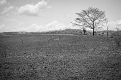 Albero bianco nero Immagini Stock Libere da Diritti