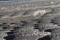 Albero bianco in una terra grigia Immagine Stock Libera da Diritti