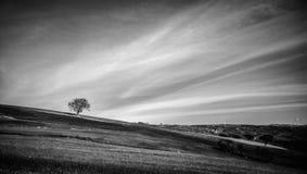 Albero in biancoe nero Stock Fotografie