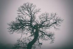 Albero bizzarro in nebbia densa, fondo nebbioso fotografia stock libera da diritti