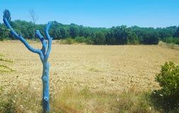 Albero blu dentro Boisset-et-Gaujac Immagini Stock Libere da Diritti