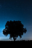 Albero blu di notte Fotografie Stock Libere da Diritti