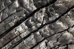 Albero bruciato Fotografia Stock