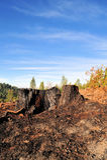 albero bruciato del ceppo fotografia stock libera da diritti