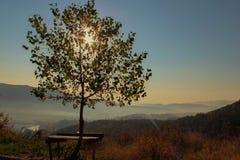 Albero Bulgaria di tramonto fotografie stock