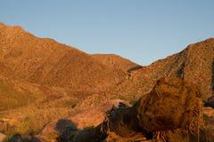 Albero caduto in canyon Immagine Stock