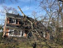 Albero caduto - danno del vento Fotografie Stock Libere da Diritti