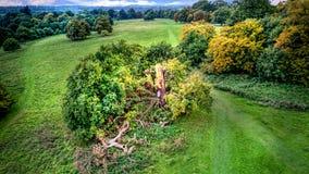 Albero caduto dopo la tempesta Fotografia Stock
