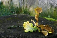 Albero caduto foglia di autunno Fotografie Stock Libere da Diritti