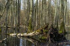 Albero caduto nel campo della palude Fotografia Stock Libera da Diritti