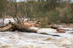 Albero caduto nelle rapide di Bell Immagini Stock