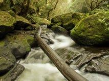 Albero caduto sopra il flusso isolato e la cascata Fotografia Stock