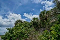 Albero caduto sulla spiaggia Immagini Stock Libere da Diritti
