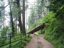 Albero caduto in una traccia della foresta Fotografia Stock