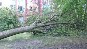 Albero caduto uragano stock footage