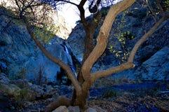 Albero & cascata vaghi Immagine Stock