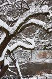 Albero in Central Park coperto di neve durante la tempesta della neve di Niko Fotografie Stock Libere da Diritti