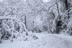 Albero che è sopraffatto da forte nevicata Immagini Stock Libere da Diritti