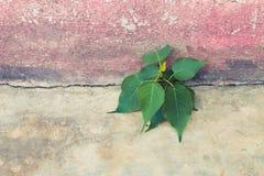 Albero che cresce in calcestruzzo Fotografia Stock