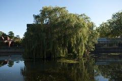 Albero che cresce dall'acqua Fotografie Stock