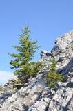 Albero che cresce dalla roccia Immagini Stock Libere da Diritti