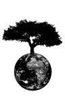 Albero che cresce dalla terra del pianeta Immagini Stock