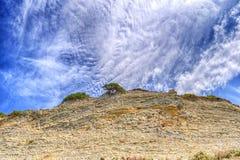 Albero che cresce sopra la roccia Fotografia Stock Libera da Diritti