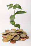 Albero che cresce sulle monete Fotografie Stock Libere da Diritti