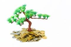 Albero che cresce sulle monete dorate Immagini Stock Libere da Diritti