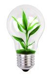 Albero che cresce in una lampada Fotografia Stock