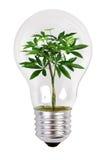Albero che cresce in una lampada Fotografie Stock