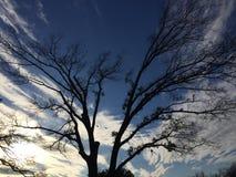 Albero che dipinge il cielo immagine stock