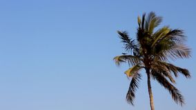 Albero che scuote, vento del dattero o della noce di cocco dell'oceano che soffia gli alberi duri che ballano bello moto degli al video d archivio