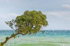 Albero che trascura il mare Fotografie Stock
