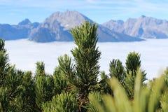 Albero in cima ad una montagna fotografie stock libere da diritti