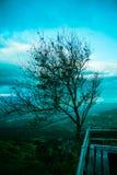 Albero in cima alla montagna Immagini Stock