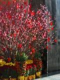 Albero cinese 2 dei soldi di anno nuovo Fotografie Stock