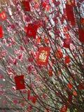 Albero cinese dei soldi di nuovo anno Immagini Stock