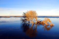 Albero circondato da acqua Fotografia Stock