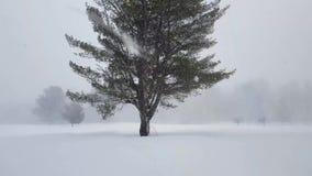 Albero circostante di caduta della forte nevicata grande archivi video