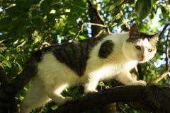 Albero climbiing del gatto del paese Immagine Stock