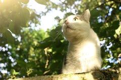 Albero climbiing del gatto del paese Fotografia Stock