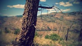 Albero in Colorado Fotografia Stock Libera da Diritti