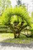 Albero coltivato immagine stock