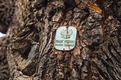 Albero come monumento naturale in Polonia Immagine Stock
