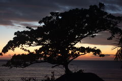 Albero con alba sul mare Immagini Stock