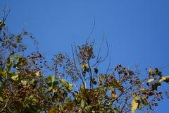 Albero con cielo blu Immagine Stock