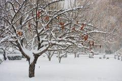 Albero con forte nevicata in giardino di inverno fotografie stock libere da diritti