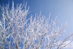 Albero con ghiaccio Fotografia Stock