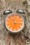 Albero con gli orologi dello swag sul fondo dell'albero immagine stock libera da diritti
